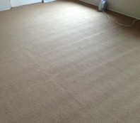 Roll Crush Carpet